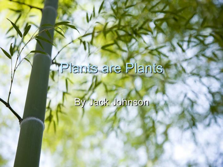 plants are plants n.