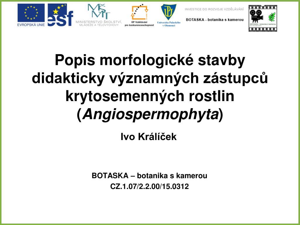 popis morfologick stavby didakticky v znamn ch z stupc krytosemenn ch  rostlin angiospermophyta n. 37c05528f3