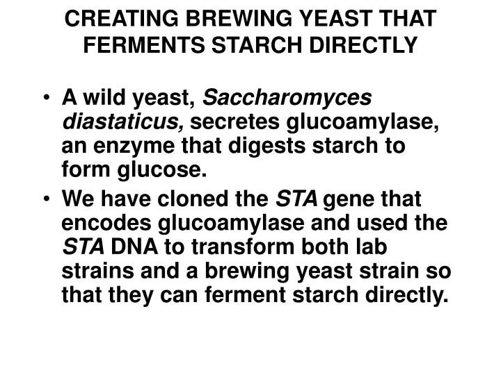 CREATING BREWING YEAST THAT FERMENTS STARCH DIRECTLY