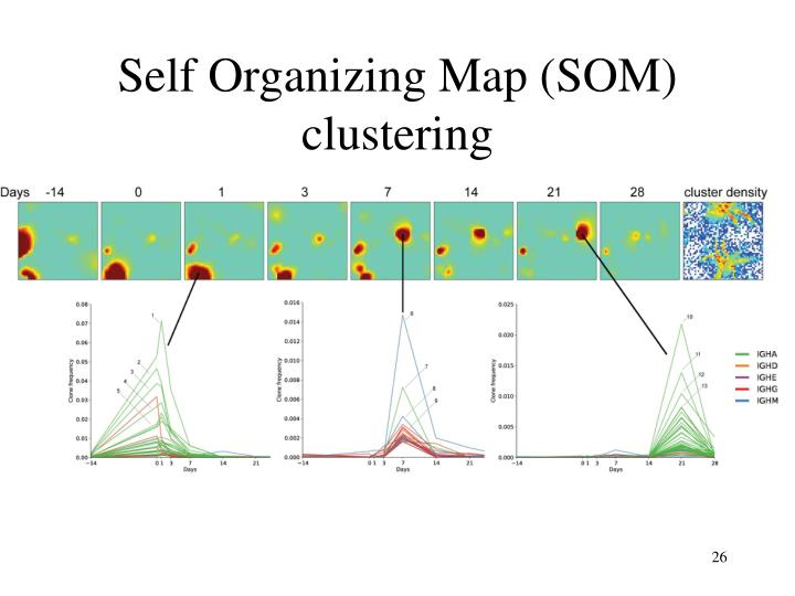 Self Organizing Map (SOM) clustering