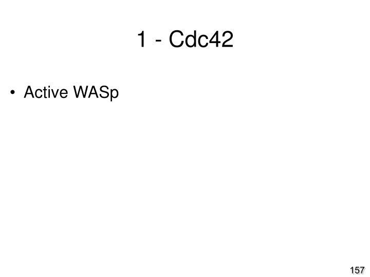1 - Cdc42