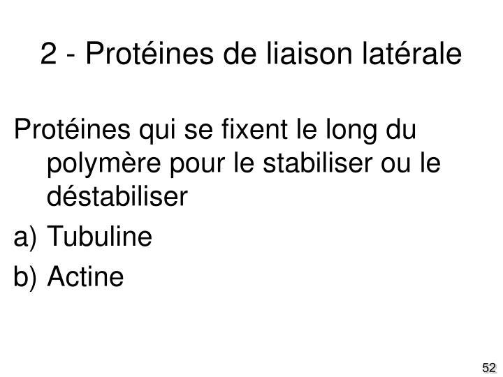 2 - Protéines de liaison latérale