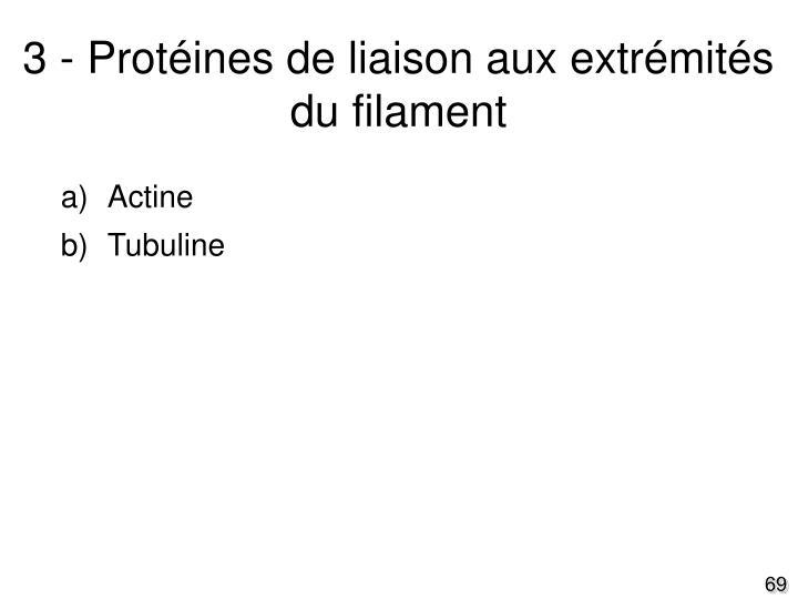 3 - Protéines de liaison aux extrémités du filament