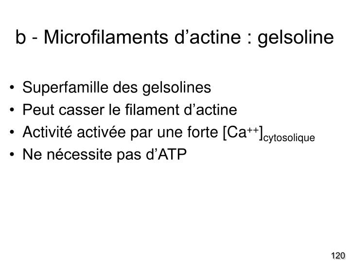 b - Microfilaments d'actine : gelsoline