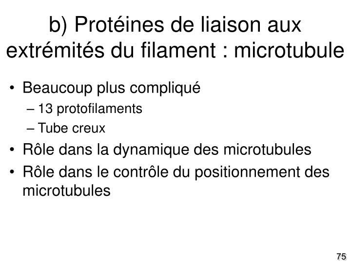 b) Protéines de liaison aux extrémités du filament : microtubule