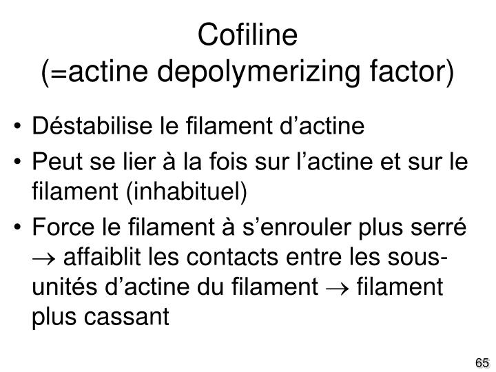 Cofiline