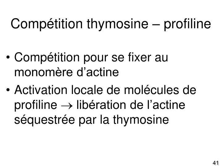 Compétition thymosine – profiline