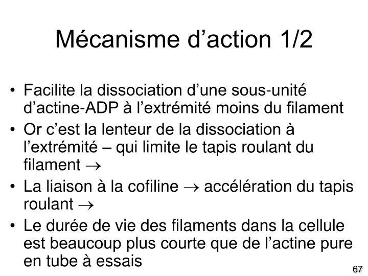 Mécanisme d'action 1/2