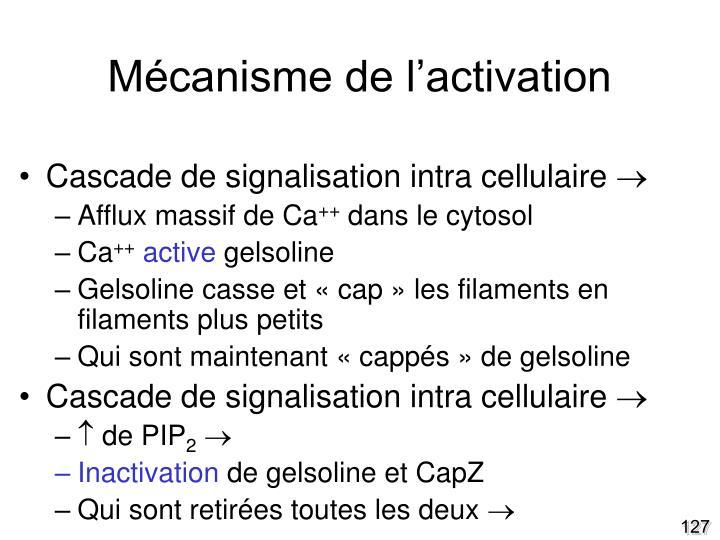 Mécanisme de l'activation