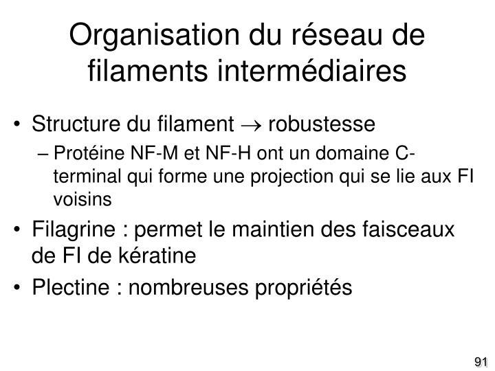 Organisation du réseau de filaments intermédiaires