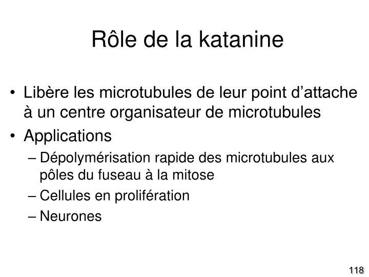 Rôle de la katanine