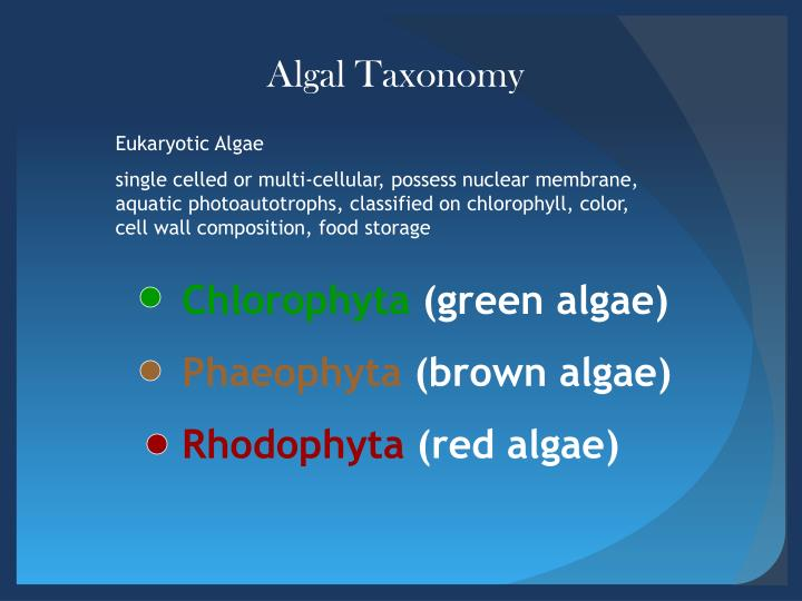 Algal Taxonomy