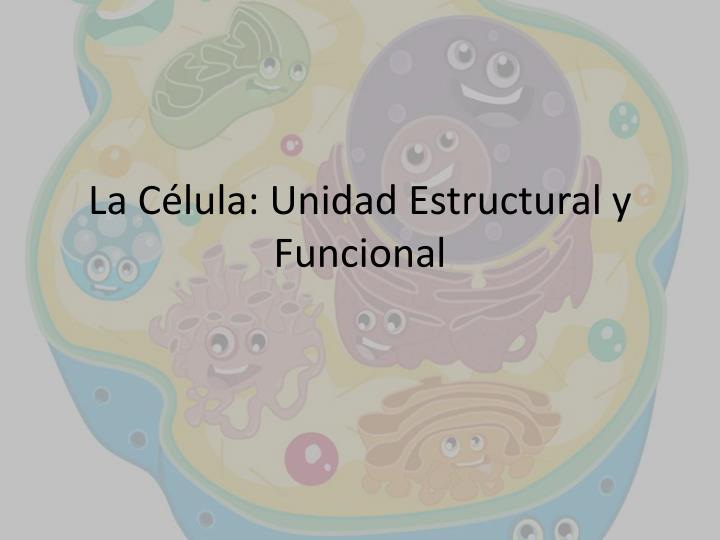 La c lula unidad estructural y funcional