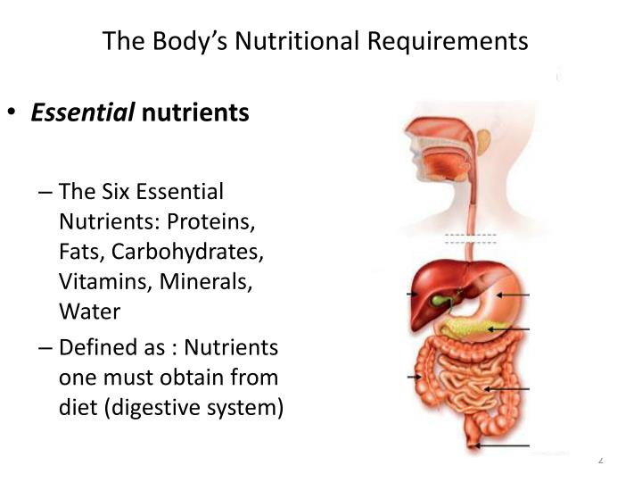 define the basic nutritional requirements of School children should eat a healthy energy and nutrient requirements a basic understanding of the principles of healthy eating can help them to make.