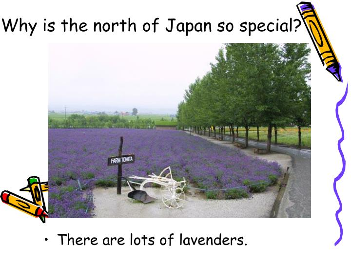 Why is the north of Japan so special?