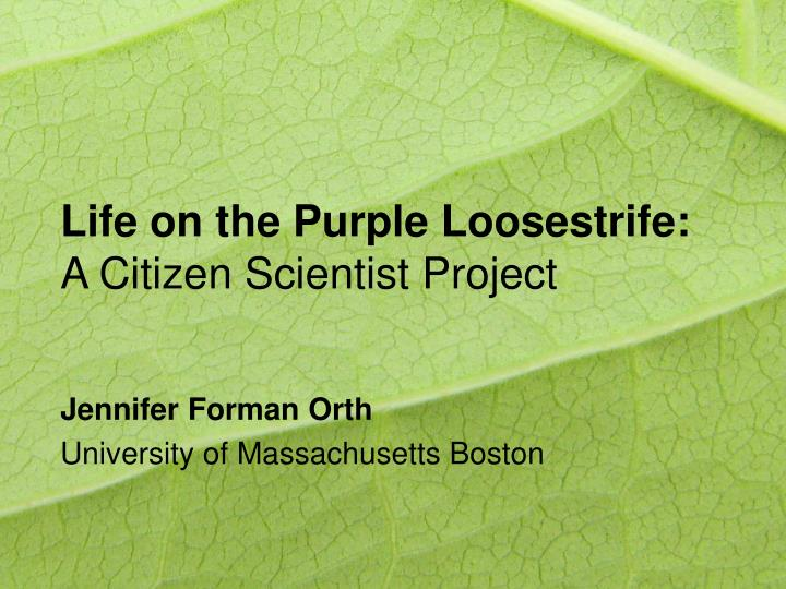 Life on the purple loosestrife a citizen scientist project