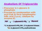 anabolism of triglyceride