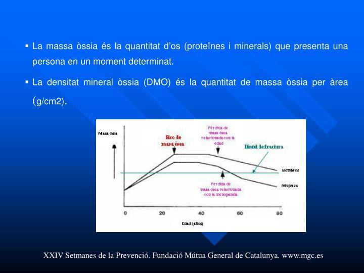 La massa òssia és la quantitat d'os (proteïnes i minerals) que presenta una persona en un moment determinat.