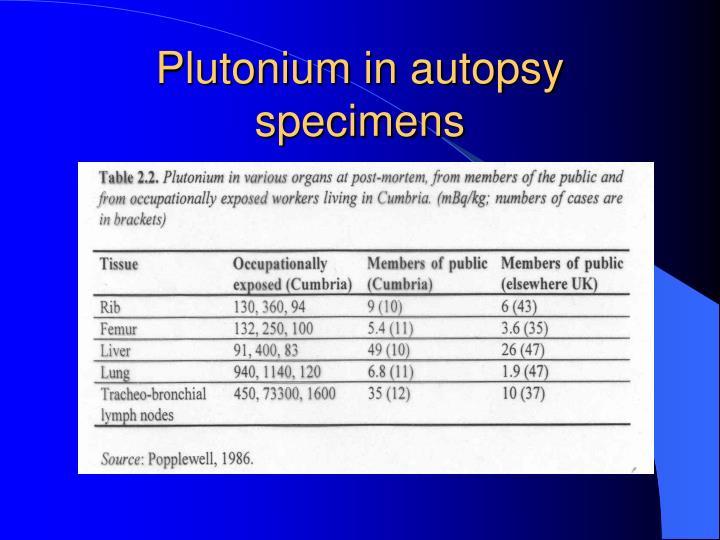 Plutonium in autopsy specimens