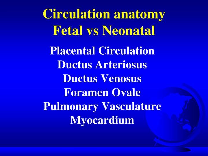 Circulation anatomy