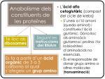 anabolisme dels constituents de les prote nes