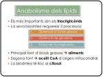 anabolisme dels l pids