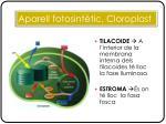 aparell fotosint tic cloroplast