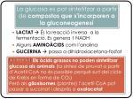 la glucosa es pot sintetitzar a partir de compostos que s incorporen a la gluconeogenesi