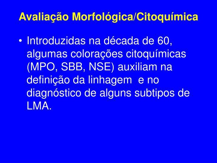Avaliação Morfológica/Citoquímica