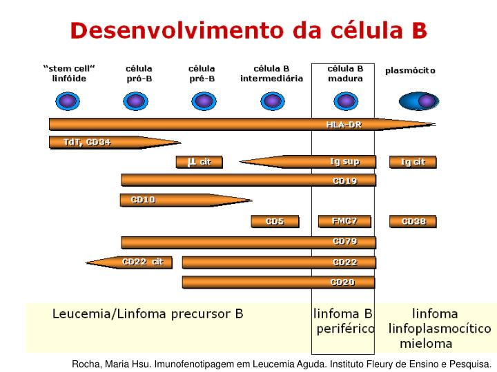 Rocha, Maria Hsu. Imunofenotipagem em Leucemia Aguda. Instituto Fleury de Ensino e Pesquisa.