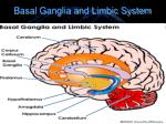 basal ganglia and limbic system
