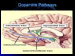 dopamine pathways