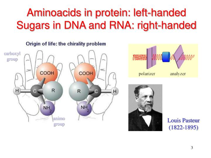 Aminoacids in protein left handed sugars in dna and rna right handed