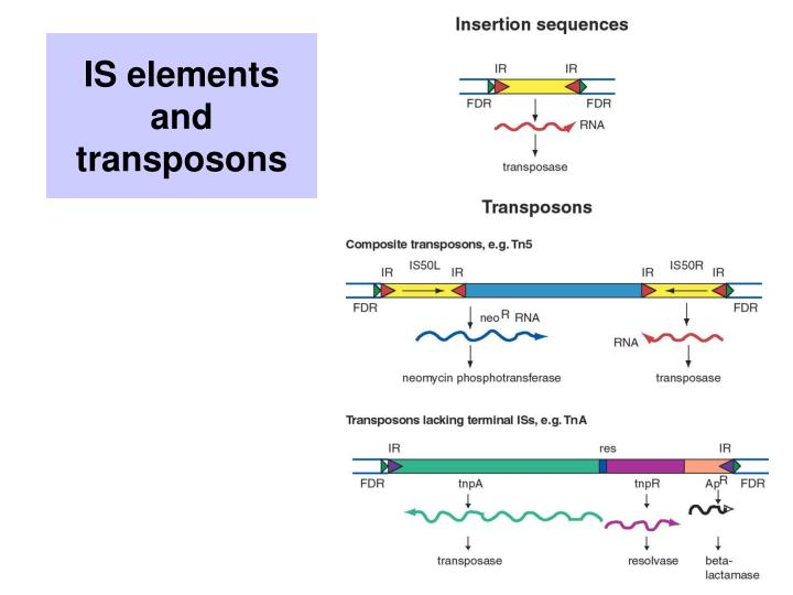 IS elements and transposons