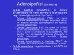 adenoipofisi struttura1