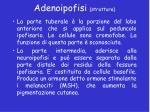 adenoipofisi struttura2