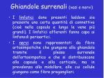 ghiandole surrenali vasi e nervi1