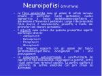 neuroipofisi struttura1