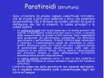 paratiroidi struttura