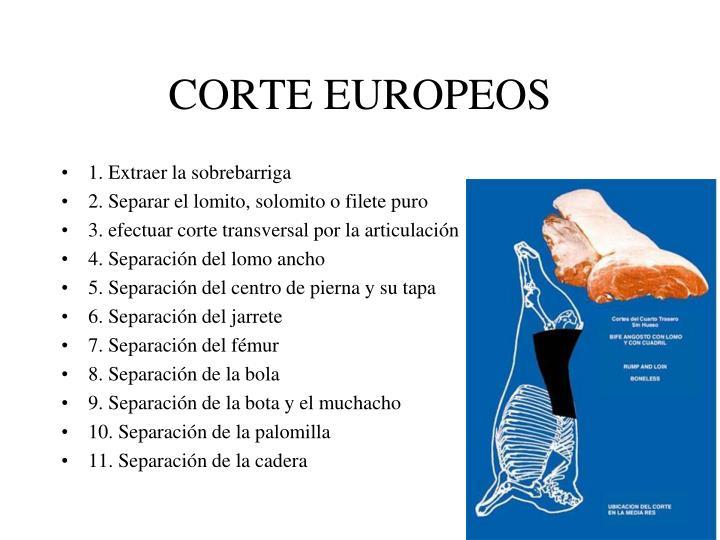 CORTE EUROPEOS