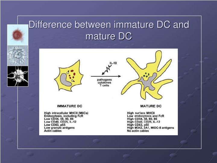 Difference between immature DC and mature DC