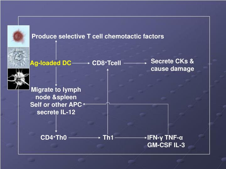 Produce selective T cell chemotactic factors