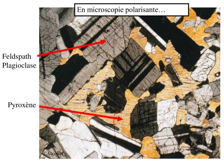 En microscopie polarisante…