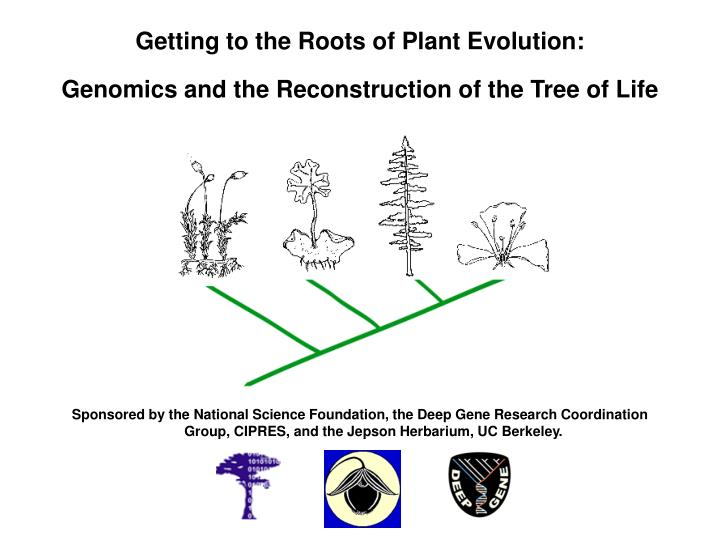 getting to the roots of plant evolution genomics and the reconstruction of the tree of life n.