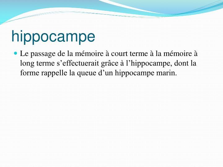 hippocampe