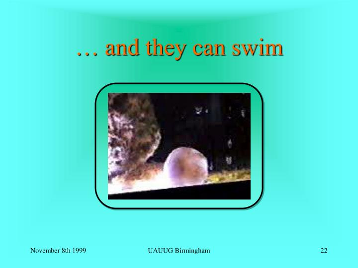 … and they can swim