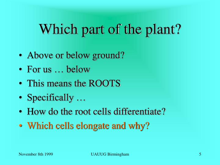 Which part of the plant?