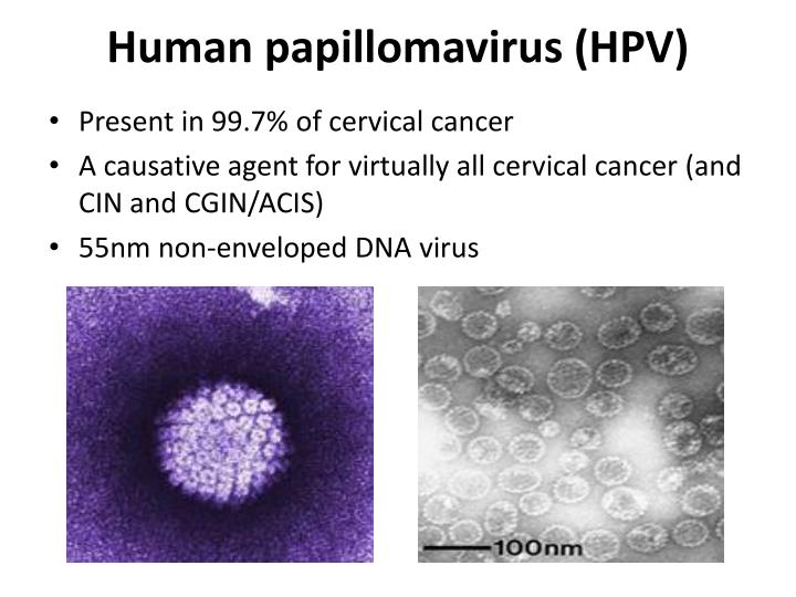 human papillomavirus and cervical cancer Virtually all cases of cervical cancer are caused by hpv about 3,100 cases of cervical cancer are diagnosed in the uk each year hpv can also cause cancers in other genital areas, like the vagina, vulva, penis, and anus.
