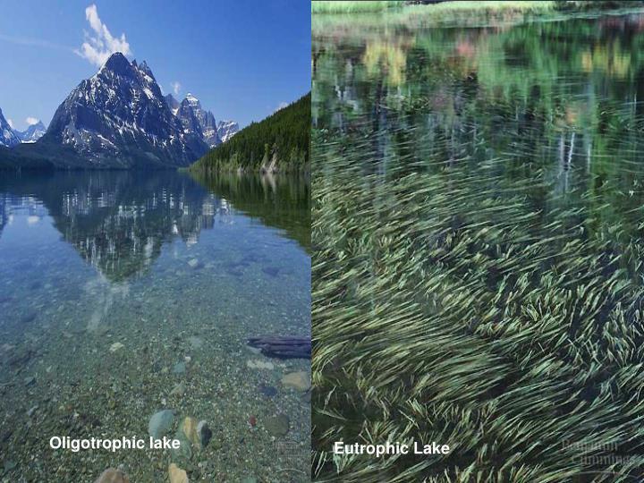 Oligotrophic lake