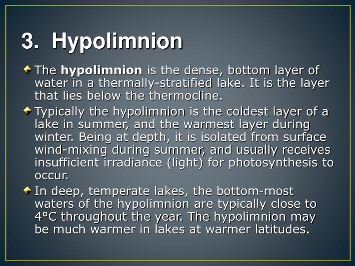 3.  Hypolimnion
